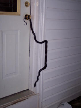 snakes of georgia venomous snakes reptile removal of nuisance animals education rescue adopt. Black Bedroom Furniture Sets. Home Design Ideas