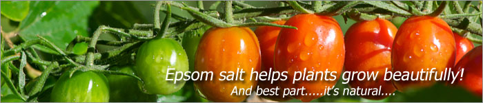 Epsom Salt Fertilizer For Growing Awesome Plants